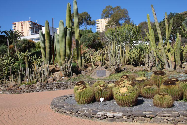 Jardín de Cáctus en Parque de la Paloma