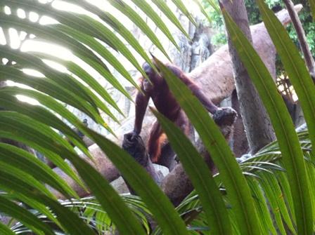 Zoológico Bioparc en Fuengirola