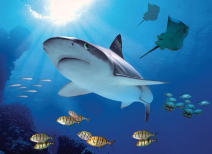 Exposición de animales marinos en Sea Life Benalmádena