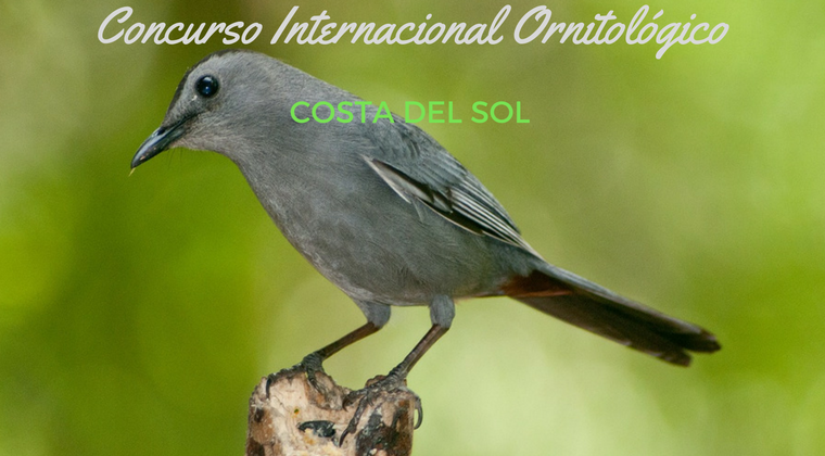 Concurso Internacional Ornitológico Costa del Sol en Torremolinos