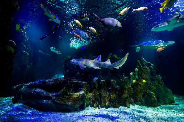 Tunel Jurásico Sea Life