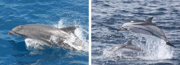Avistamiento de delfines en Benalmádena