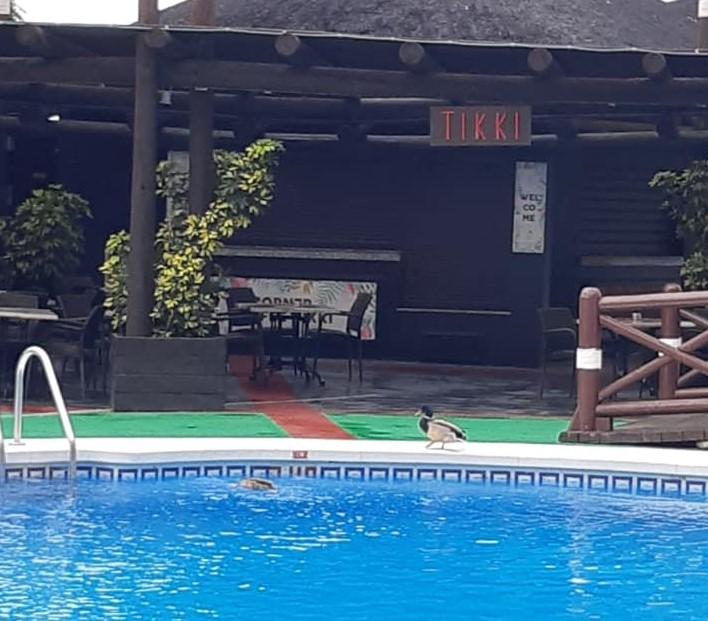 Patos en la piscina del hotel Sunset Beach Club